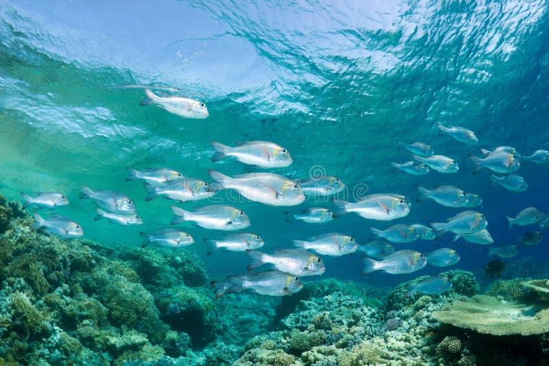 Istruzione dei pesci fotografie stock
