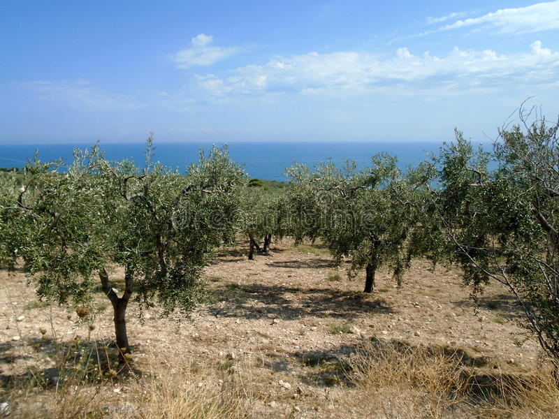 Itália - Olive Garden foto de stock