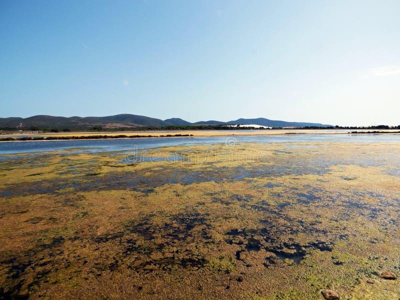 Itália, Sardinia, Carbonia Iglesias, Porto Pino, a lagoa atrás das dunas de areia brancas foto de stock royalty free