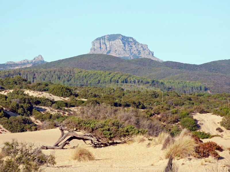 Itália, Sardinia, opinião de Piscinas de dunas e da vegetação arenosas, nas montanhas rochosas do fundo fotografia de stock