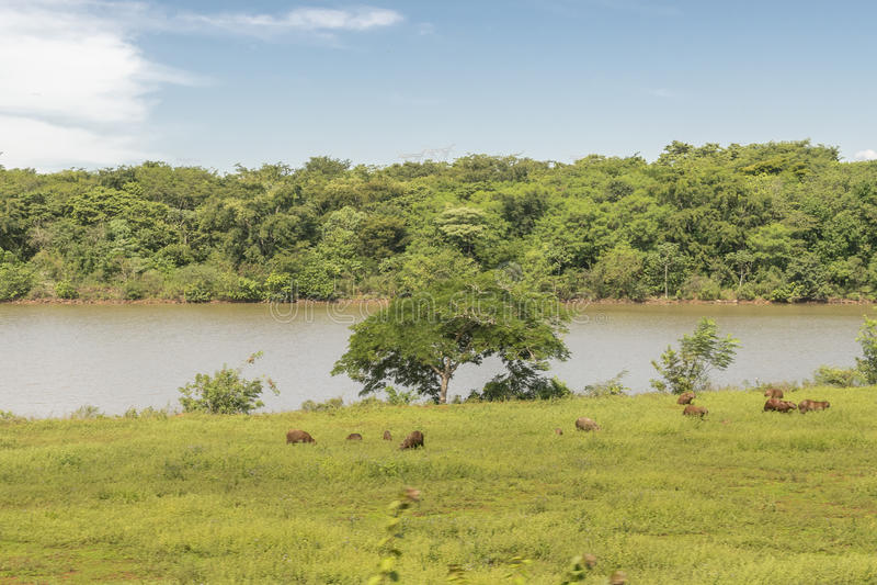 Itaipupark bij Braziliaanse Grens stock fotografie
