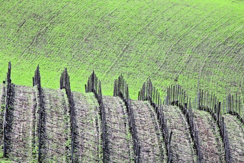 Italië: Het bosje van de wijn in Piemonte stock foto