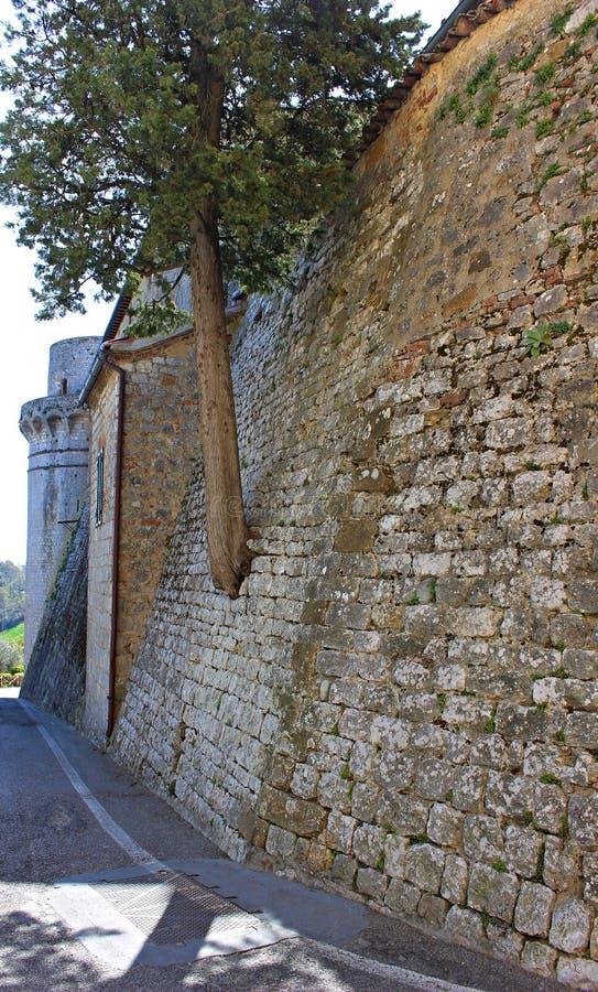 Italië, Toscaan: Boom in de oude muur wordt gekweekt die stock afbeeldingen