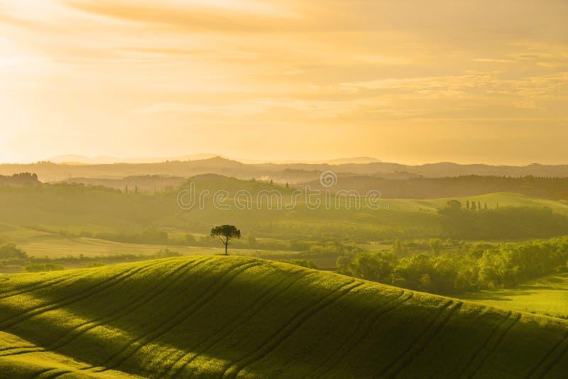 Italië toscanië Landelijk landschap bij dageraad stock fotografie