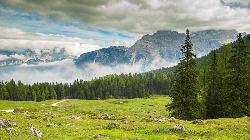 Italia, dolomías - un paisaje maravilloso, prado entre pino fotos de archivo libres de regalías