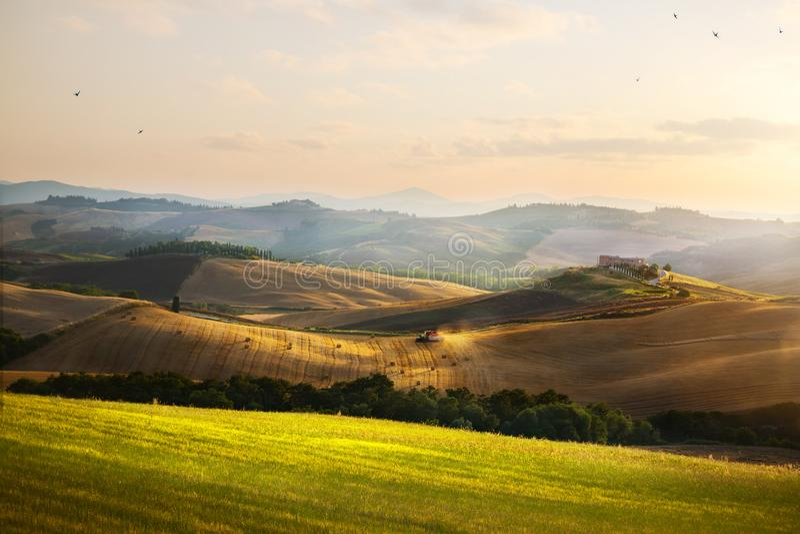 Italia Tierras de labrantío y Rolling Hills de Toscana; La del campo del verano imágenes de archivo libres de regalías