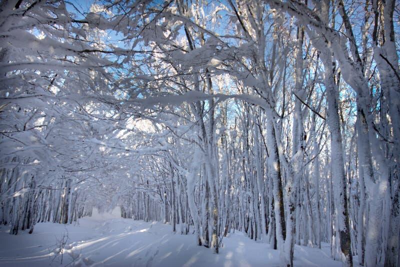 Italia, Toscana, parque nacional de los bosques de Casentino, soporte Fa imagen de archivo libre de regalías