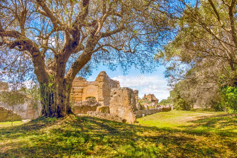 Italiaanse de boomtakken van plattelands oude ruïnes op zonnige dag in Tivoli stock fotografie