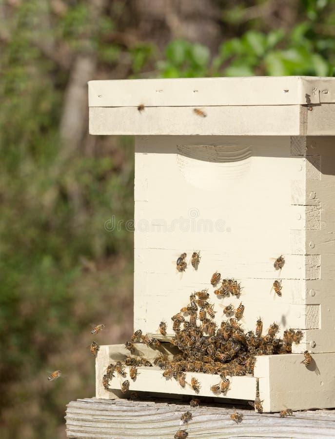 Italiaanse honingbijen en bijenkorf royalty-vrije stock afbeeldingen