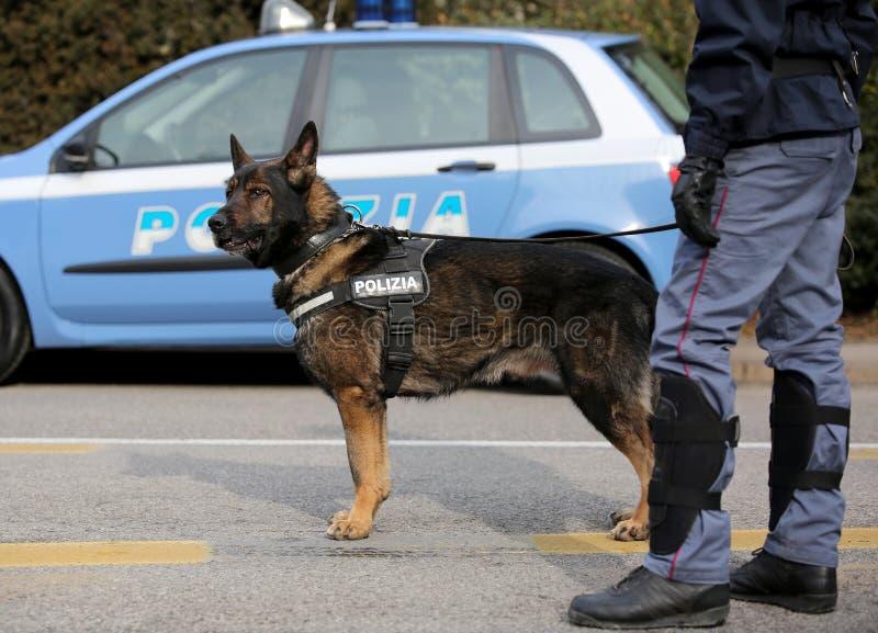 Italiaanse politiehond terwijl het patrouilleren van de stadsstraten vóór royalty-vrije stock foto's