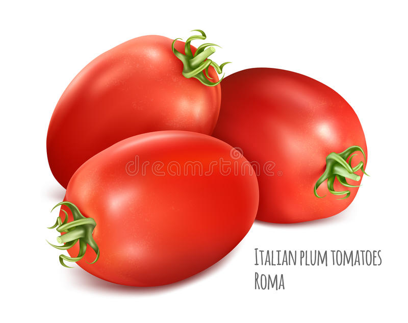 Italiaanse pruimtomaten Rome vector illustratie