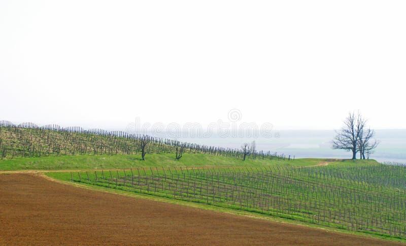 Italiaanse wijngaard royalty-vrije stock foto's