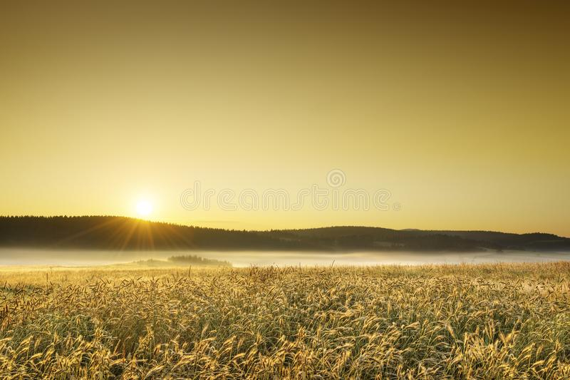 Idyllic view, foggy Tuscan fields in light of the rising sun. Italian beautiful landscape, foggy fields of Tuscany in light of the rising sun royalty free stock images
