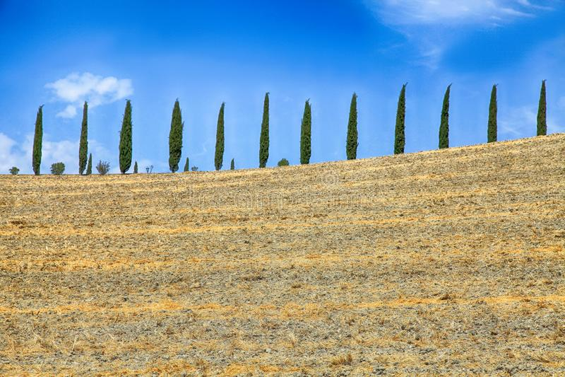 Italian cypress trees rows and yellow field rural landscape, Tuscany, Italy. royalty free stock photos