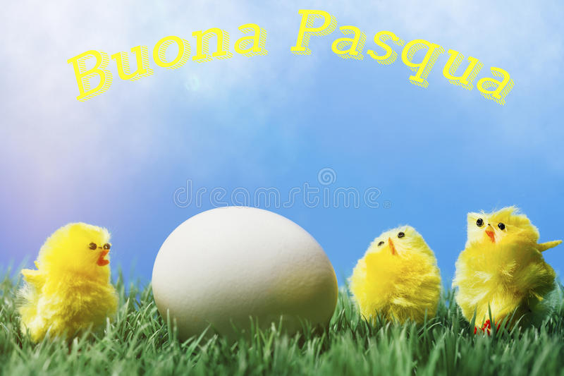 Italian easter greeting text; Group of chicks surrounding egg royalty free stock images
