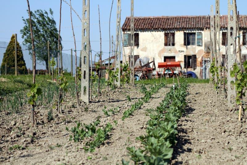 Italian Farmhouse Royalty Free Stock Photography