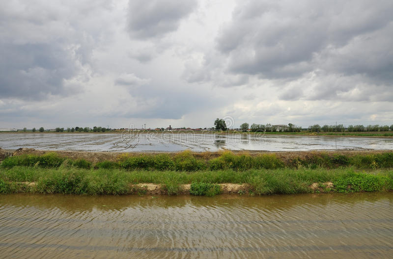 Italian flooded rice fields by Novara. Rice plantation fields - paddies - province of Novara, Italy. Spring flooding and overcast weather royalty free stock photography