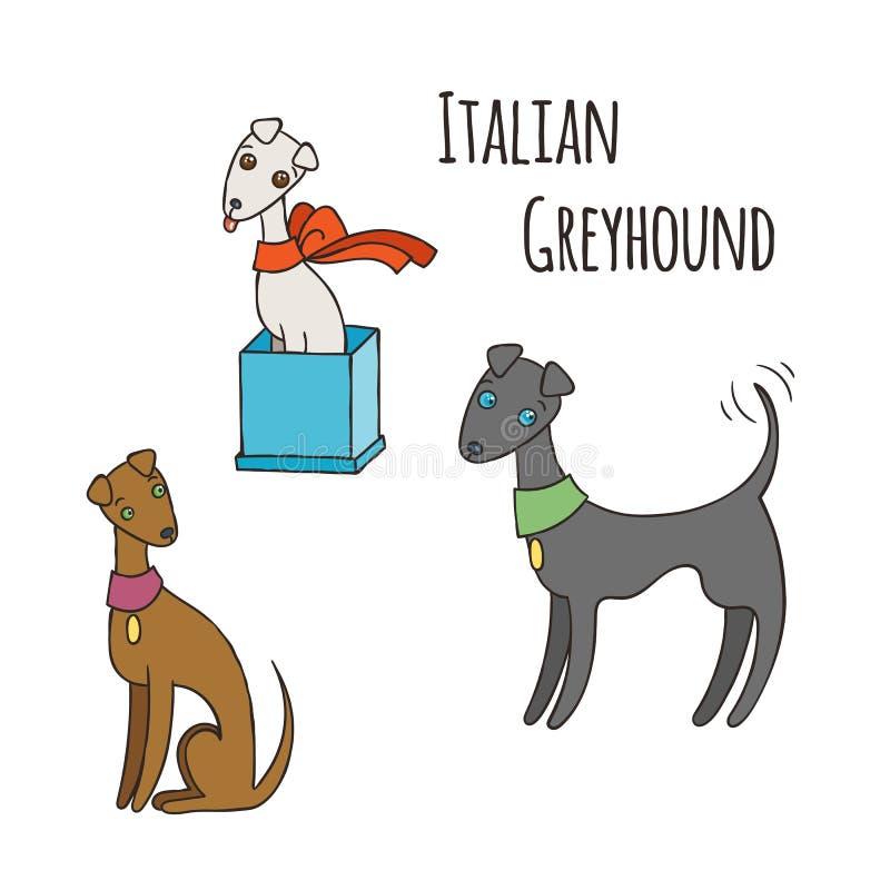 Italian Greyhound Cartoon Dog Set. vector illustration