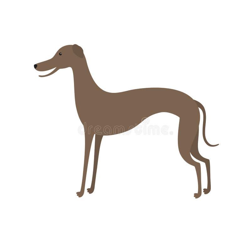 Italian greyhound. Cute vector cartoon dog stock illustration