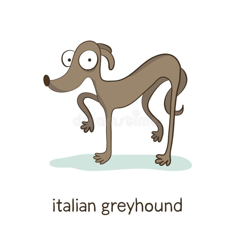 Italian greyhound. Dog character on white royalty free illustration