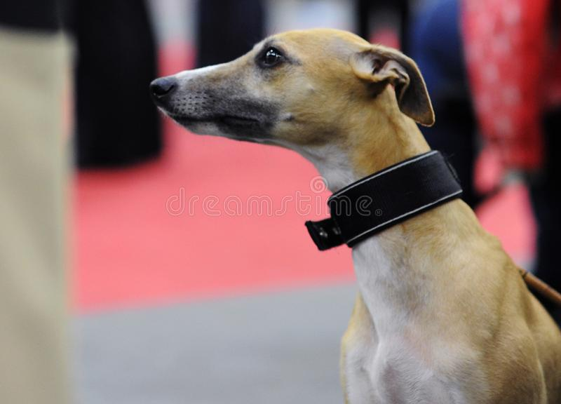 Lovely animals at the dog show stock photos