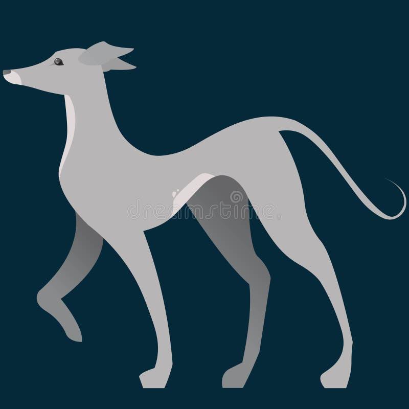 Italian Greyhound Vector Illustration with Backdrop royalty free illustration