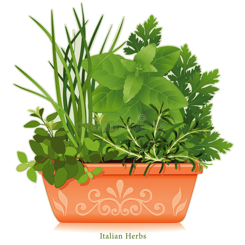 Free Italian Herbs In Clay Planter Royalty Free Stock Photo - 10066905