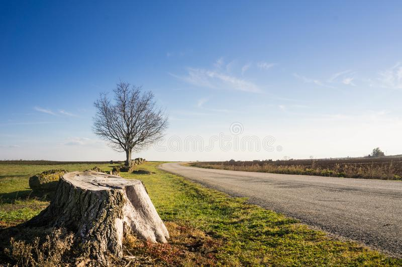 Italian Landscape with tree and blue sky on background royalty free stock photography