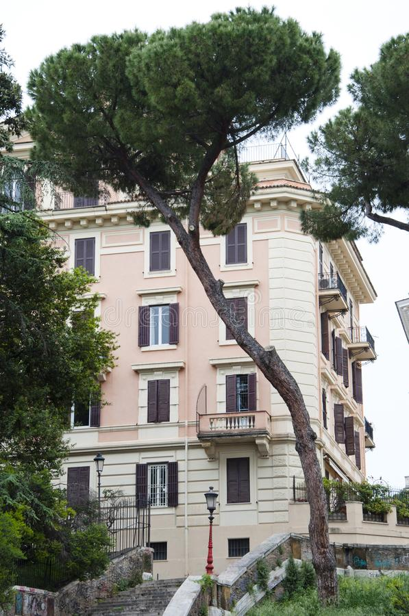 Italian stone pine tree near house in Rome city. Italian pine tr stock image
