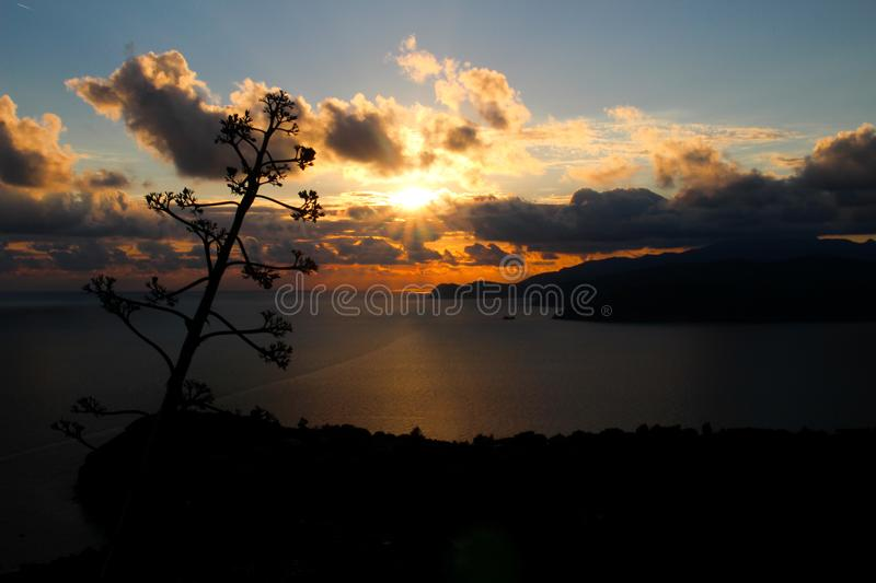Italian sunset with a tree royalty free stock photography