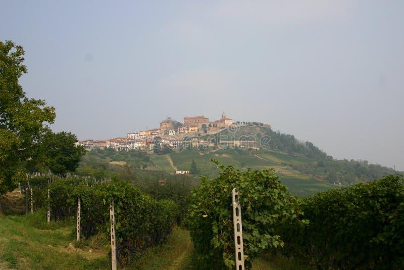 Italian vineyard stock image