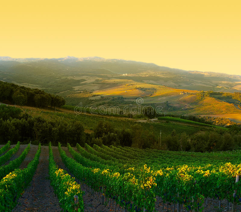 Italian Vineyard Royalty Free Stock Photos