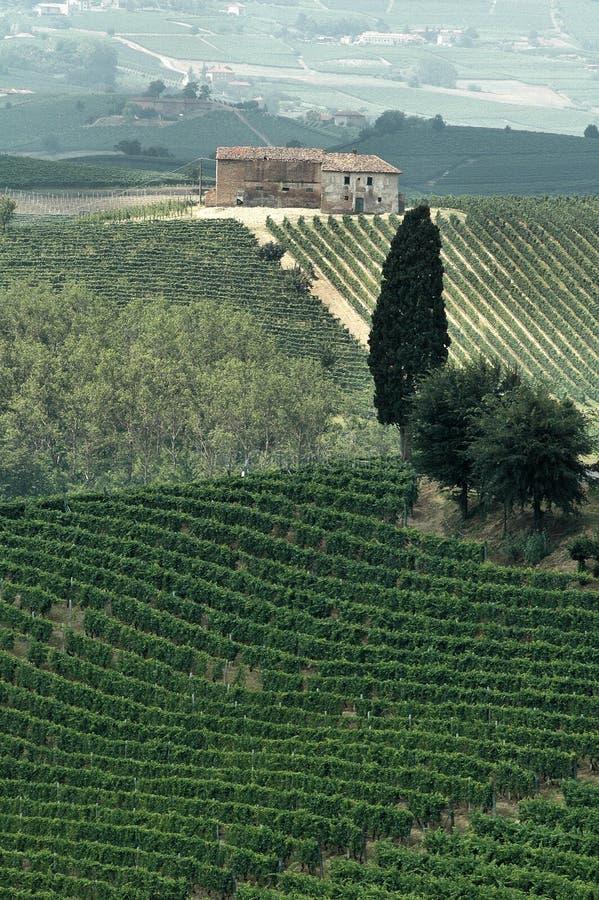 Download Italian Vineyard Royalty Free Stock Photos - Image: 4609778