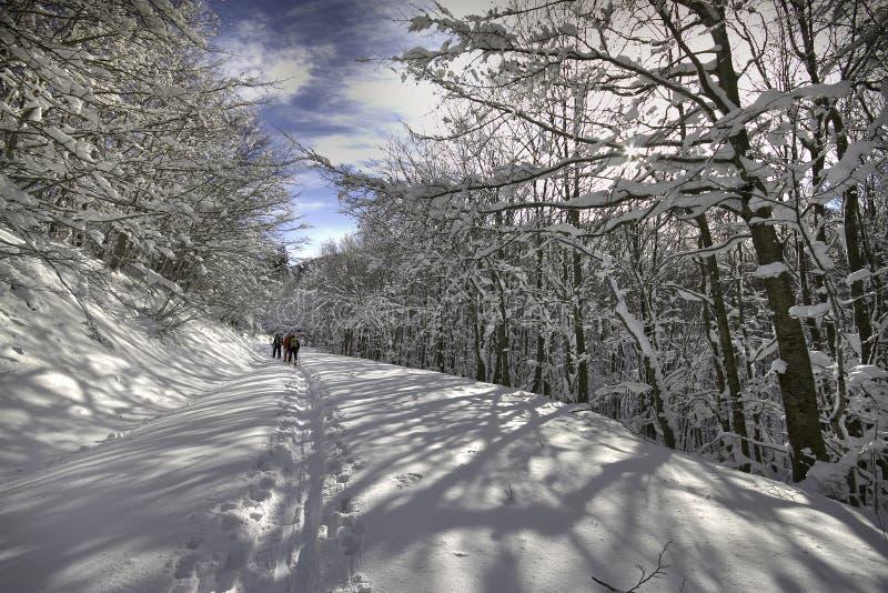 Italien Tuscany, nationalpark av de Casentino skogarna, monteringsfa fotografering för bildbyråer