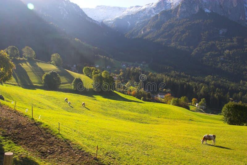Italienische Alpen und Pferde stockfotos