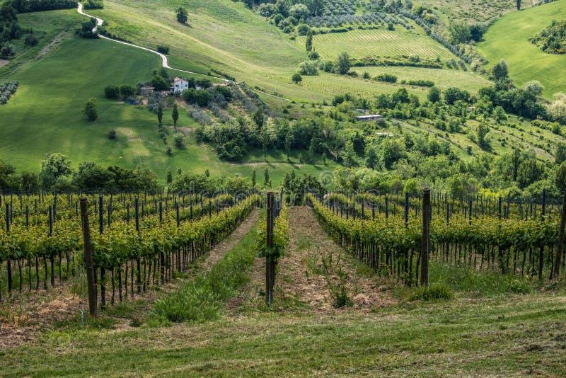 Italienische grüne Landschaft lizenzfreies stockbild