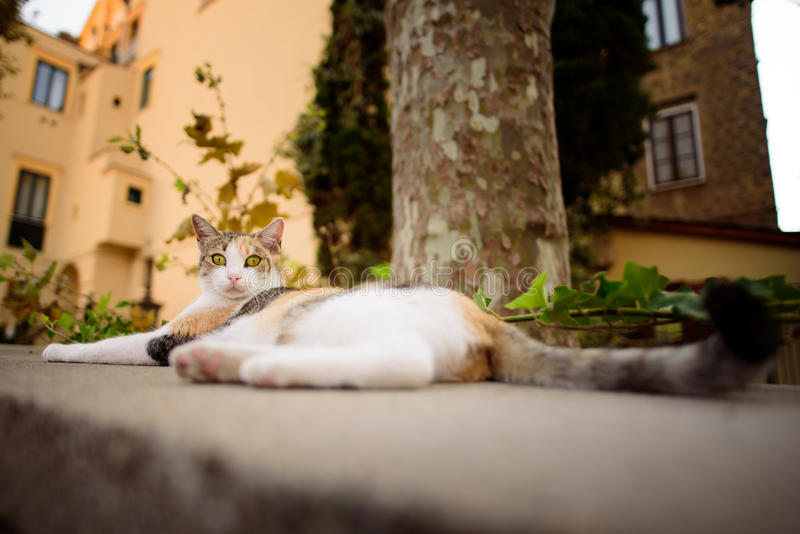 Italienische Katze, die in der städtischen Szene, Sorrent, Italien sich entspannt lizenzfreie stockfotos