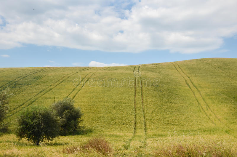 Italienische Landschaft im Sommer - Hügel und Feld lizenzfreie stockbilder