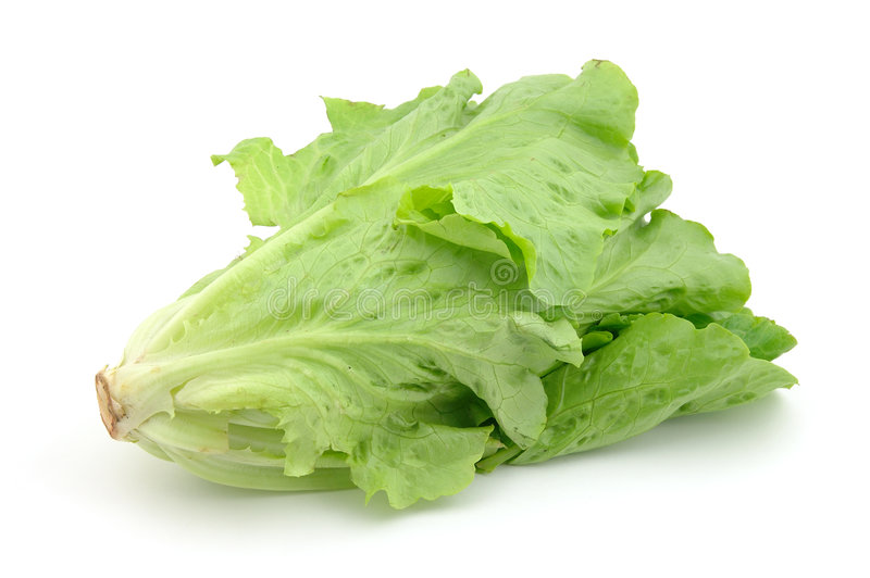Italienischer Kopfsalat lizenzfreies stockfoto