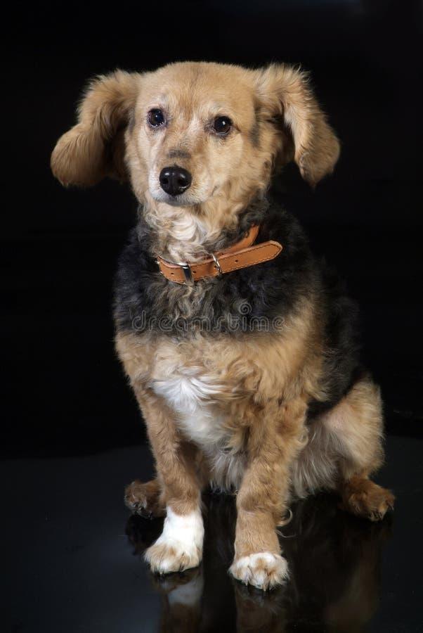 Italienischer nicht reinrassiger Hund 5970 stockfoto