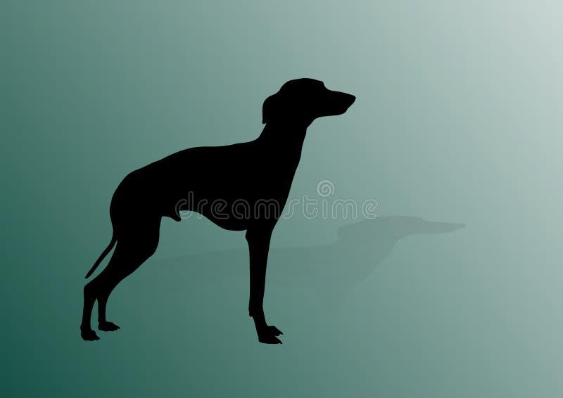 Italienischer Windhund lizenzfreie abbildung