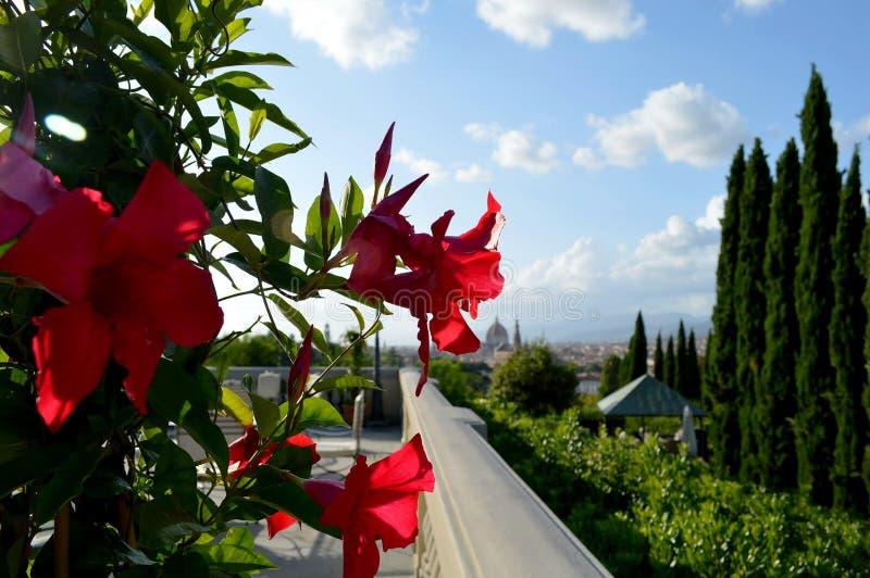 Italienska röda blommor royaltyfri bild