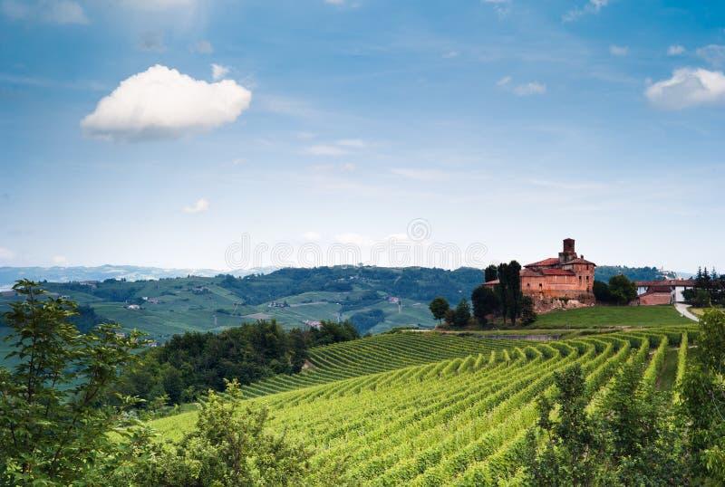 italienska vingårdar royaltyfria bilder