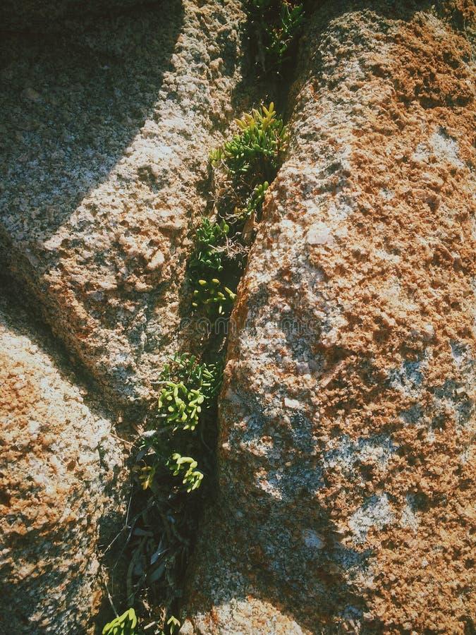 Italienskt gräs royaltyfria bilder