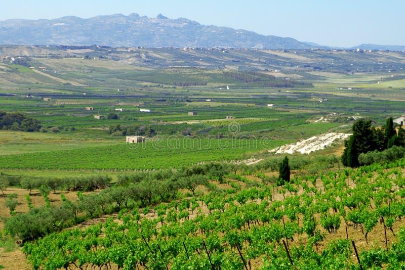 Italy clássico, vinhedo em Sicília imagens de stock royalty free