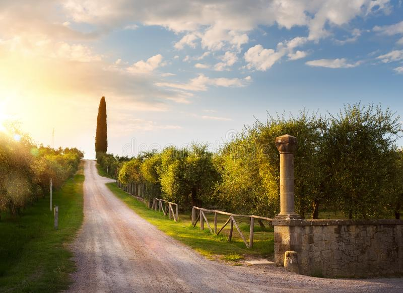 Italy countryside landscape with country road and old olive orchard ; sunset over Tuscany village. Art Italy countryside landscape with country road and old stock photos