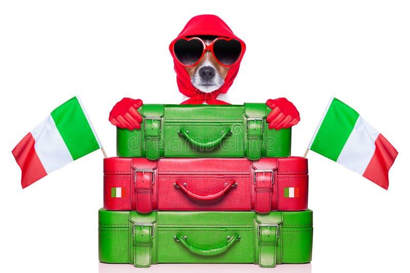 Italy dog. Italian diva dog behind stack of luggage royalty free stock photography
