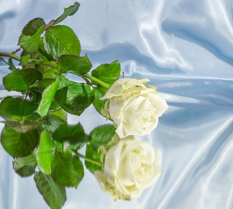 Download Abstract White Rose On A Mirror Background Stock Image
