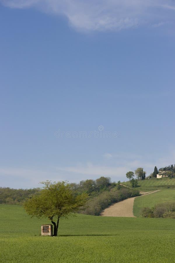 italy Tuscany fotografia royalty free