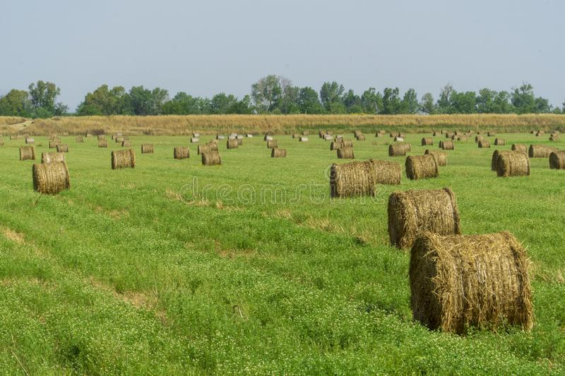 Italy Tuscany Alberese Grosseto, field with hay bales grass and yellow flowers, panoramic view. Tuscany Alberese Grosseto, field with hay bales grass and yellow stock image